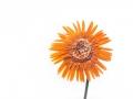 Bronze_Projected Open_Floured flower_Cecylia Sylwestrzak