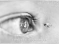 Mono Print_Bronze_Nadine Henley_Eye and the bee