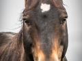 Subject - Silver - A Horse Called WhatsApp - Michelle de Swardt