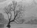 Open - Silver - The Wanaka Tree - Ron Jackson