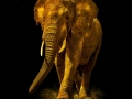 Bronze - Open - Gold-elephant - Kay Cypher