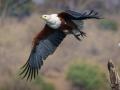 Projected Open - Siklver - Feathers fly - Michelle de Swardt