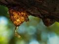 Projected Subject-Bronze-Mike Hewitt-Tree sap