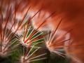 Subject_Bronze_Rita-Atkinson_Its-Cactus