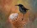 Open_Gold_Mary Jo Gomez-Jackson_Natures-Wonder